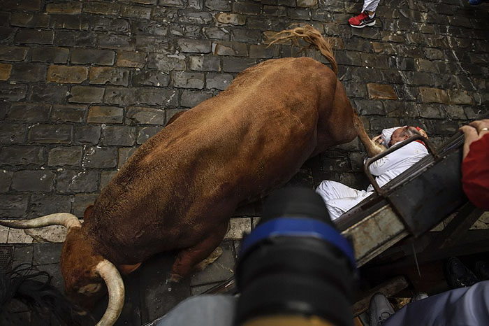 A reveler falls close to Nunez del Cubillo's fighting bulls on the Estafeta corner during the seventh day of the running of the bulls at the San Fermin Festival, in Pamplona, northern Spain, Wednesday, July 13, 2016. An American was gored in the left leg and taken to a city hospital, spokesman said, and four other runners were hospitalized. Revelers from around the world flock to Pamplona every year to take part in the eight days of the running of the bulls. (AP Photo/Alvaro Barrientos)