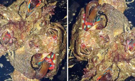 Alien barnacle