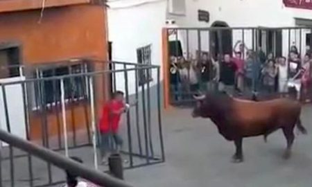 Bull Smashes Cage