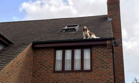 Dog roof