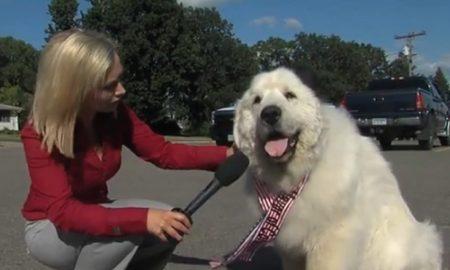 Duke dog mayor