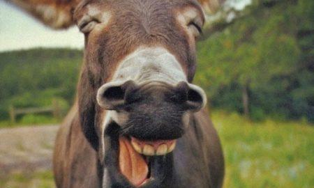 High donkey