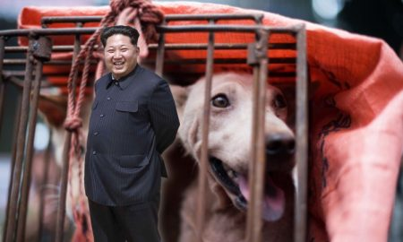 North Korea dog meat