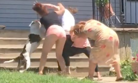 White Trash Brawl