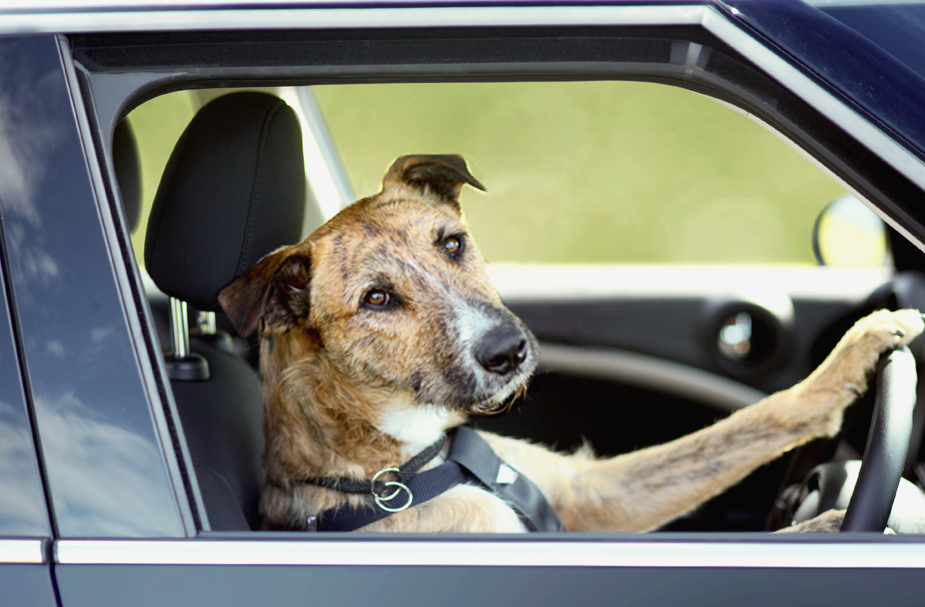 Dog Gets So Pissed Off With Owner For Leaving Him In Car He Crashes Think I Pics Driving