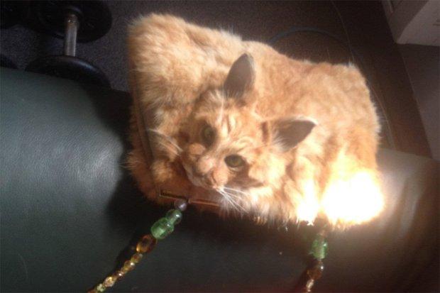 cat-handbag-2