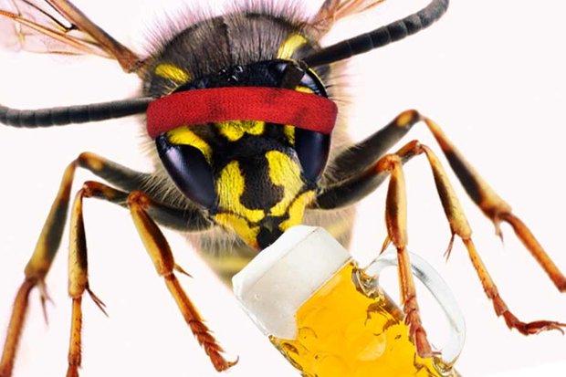 Drunk wasp