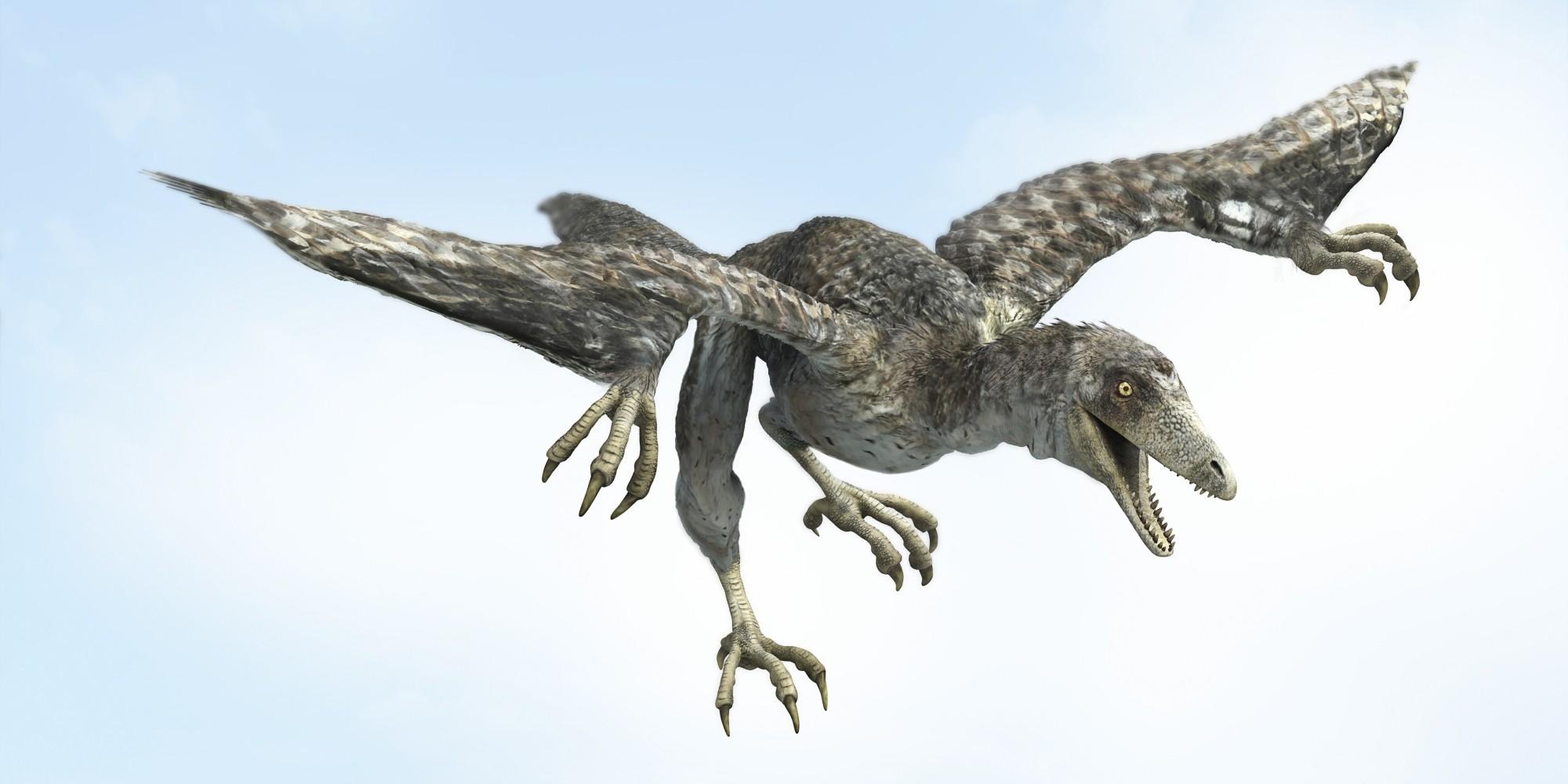 Archaeopteryx in flight