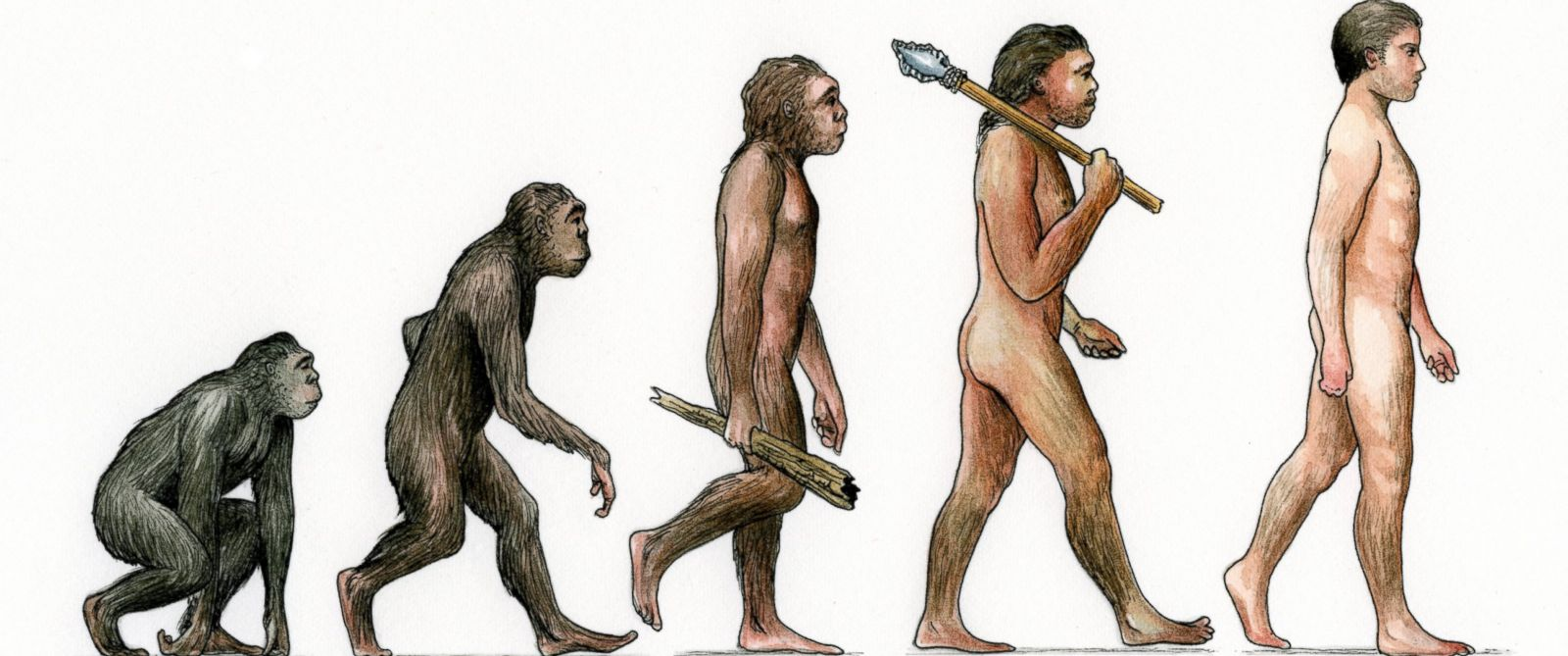 evolution-is-right-monkey-to-man