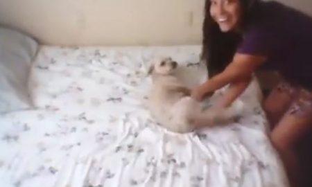 Girl Slamming Dog Against Wall