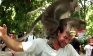 Monkeys have sex on man's shoulder