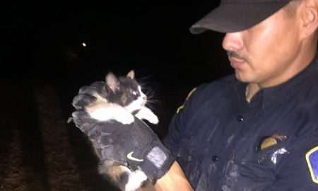 police-cat-save