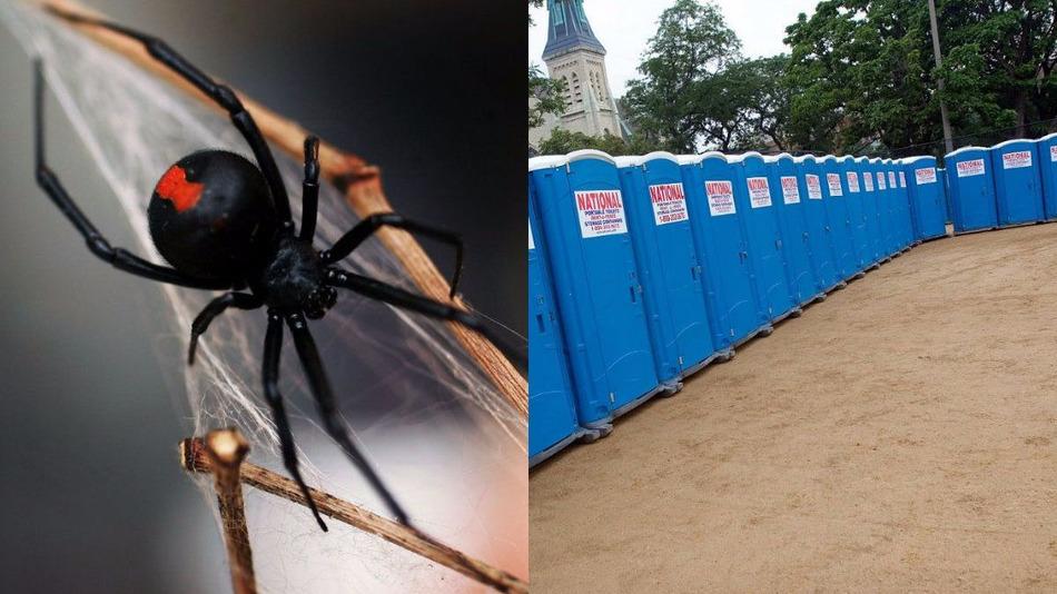 spider-bite-porter-potty