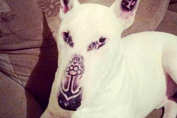 dog-tattoo-1