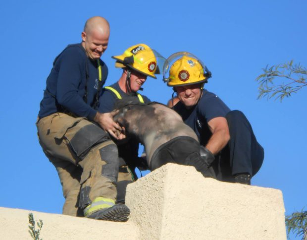 guy-stuck-chimney-3