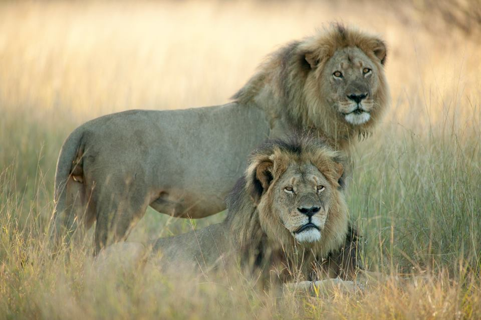 cecil-and-jericho