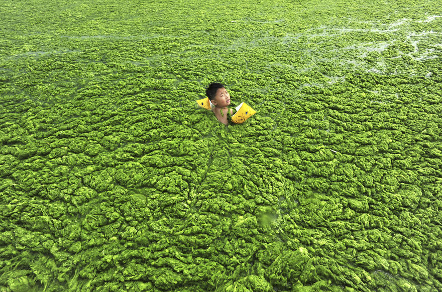 A boy swims in the algae-filled coastline of Qingdao, Shandong province July 15, 2011. Picture taken July 15, 2011. REUTERS/China Daily (CHINA - Tags: ENVIRONMENT SOCIETY SPORT SWIMMING IMAGES OF THE DAY) CHINA OUT. NO COMMERCIAL OR EDITORIAL SALES IN CHINA - RTR2OXK8