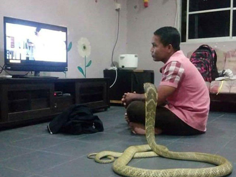 guy-and-snake