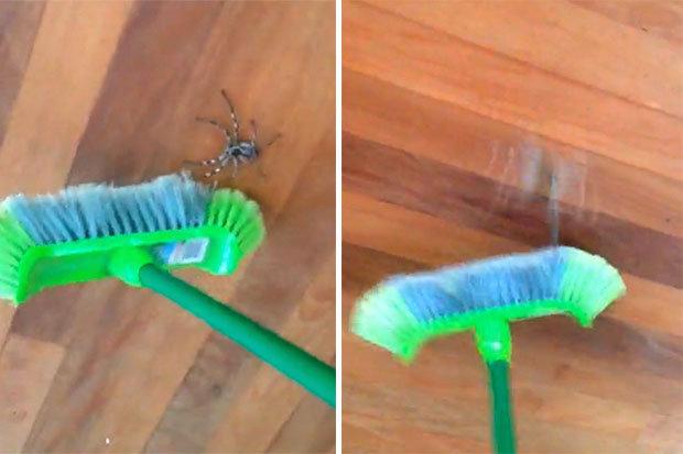 huntsman-spider