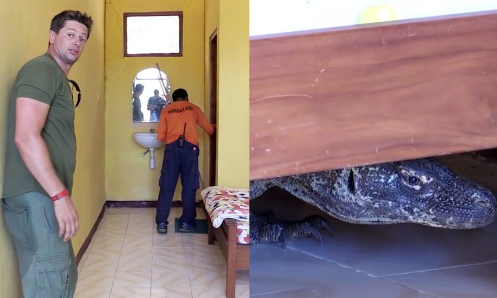 Komodo Dragon Hotel Room