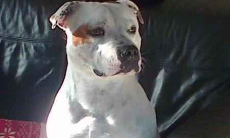 oliver-dog
