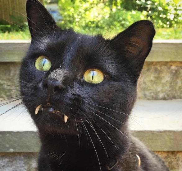 vampire-cat-3