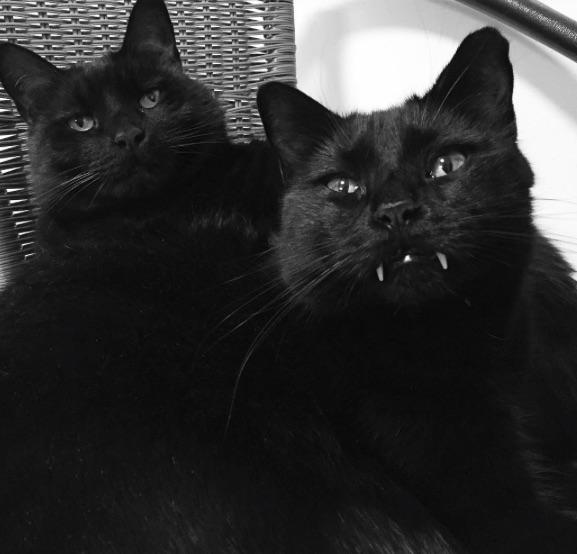 vampire-cat-4