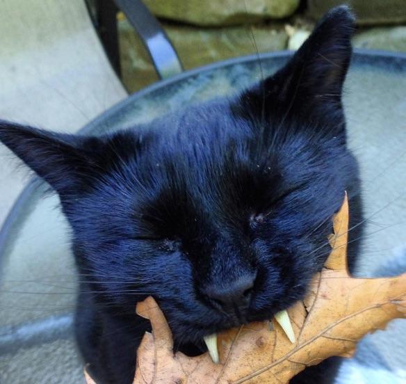 vampire-cat-5