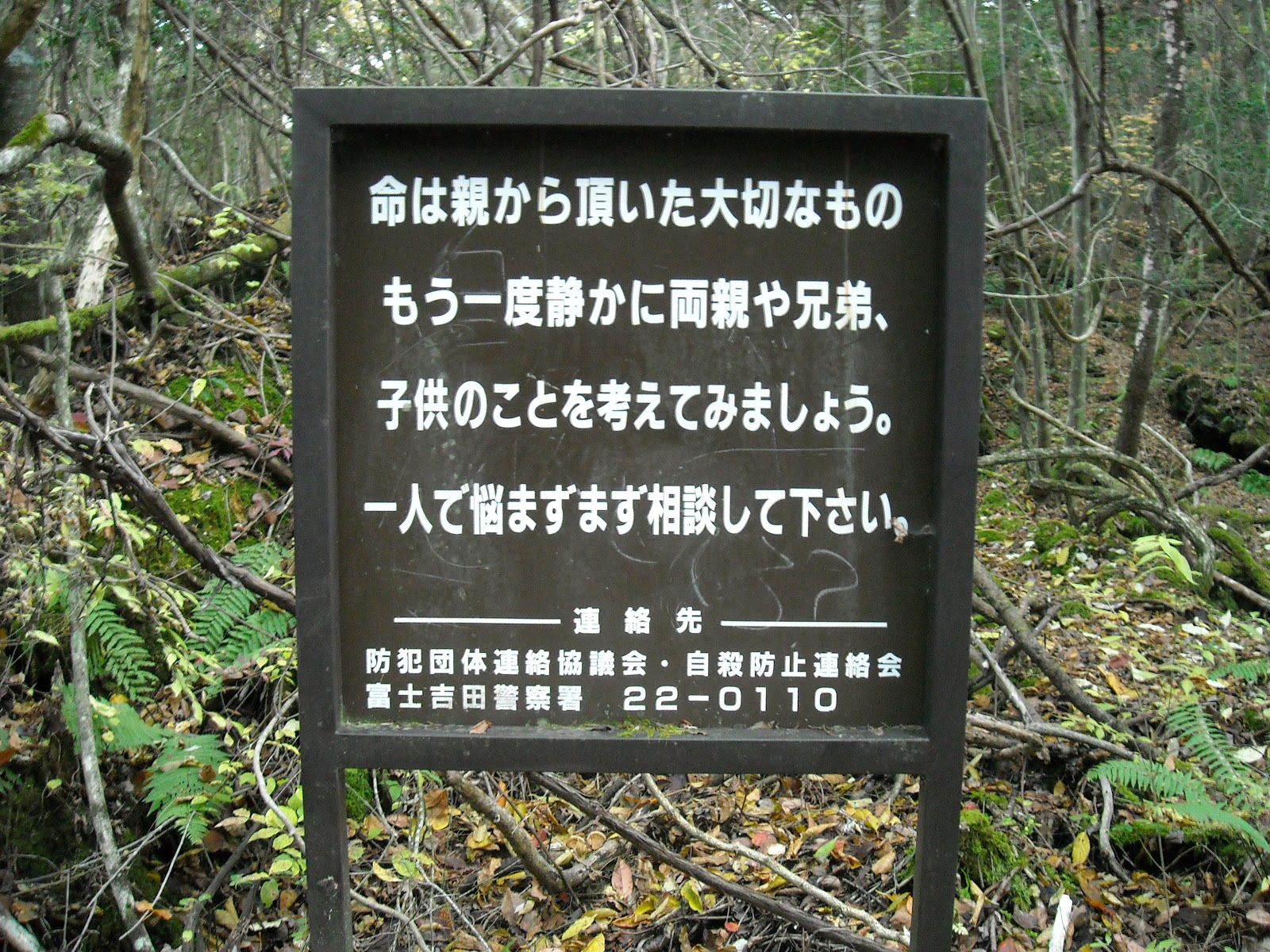 aokigahara-forest-9