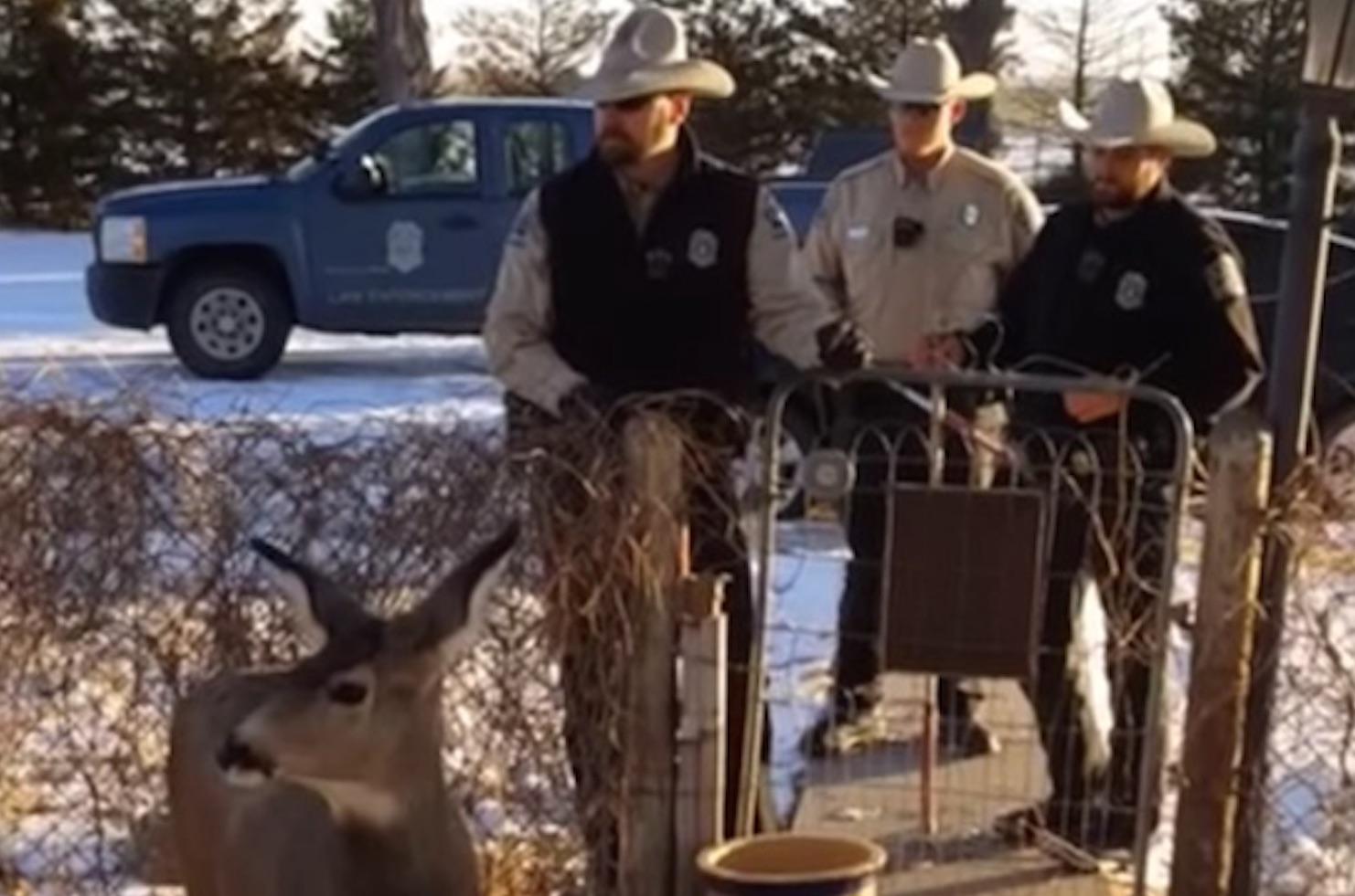 deer-killed-front-yard