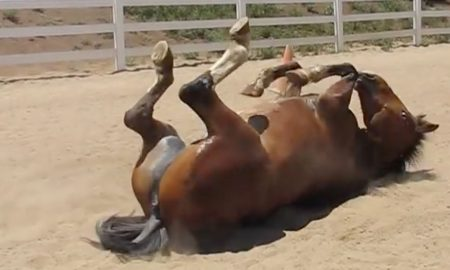 Farting horse