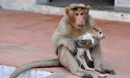 Monkey Adopts Stray Dog