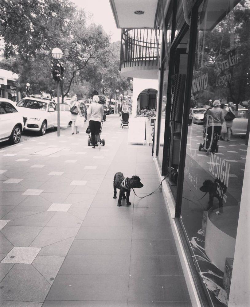 sad-dogs-11