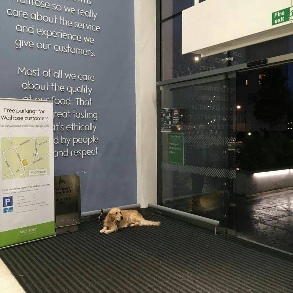 sad-dogs-13