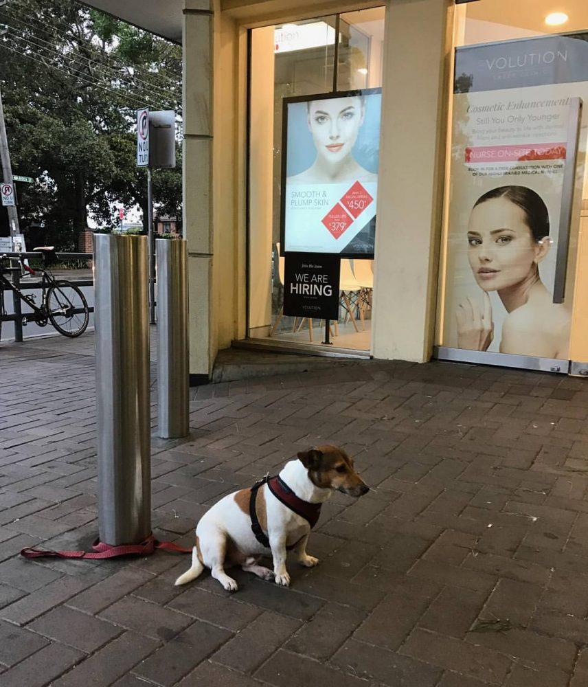 sad-dogs-17