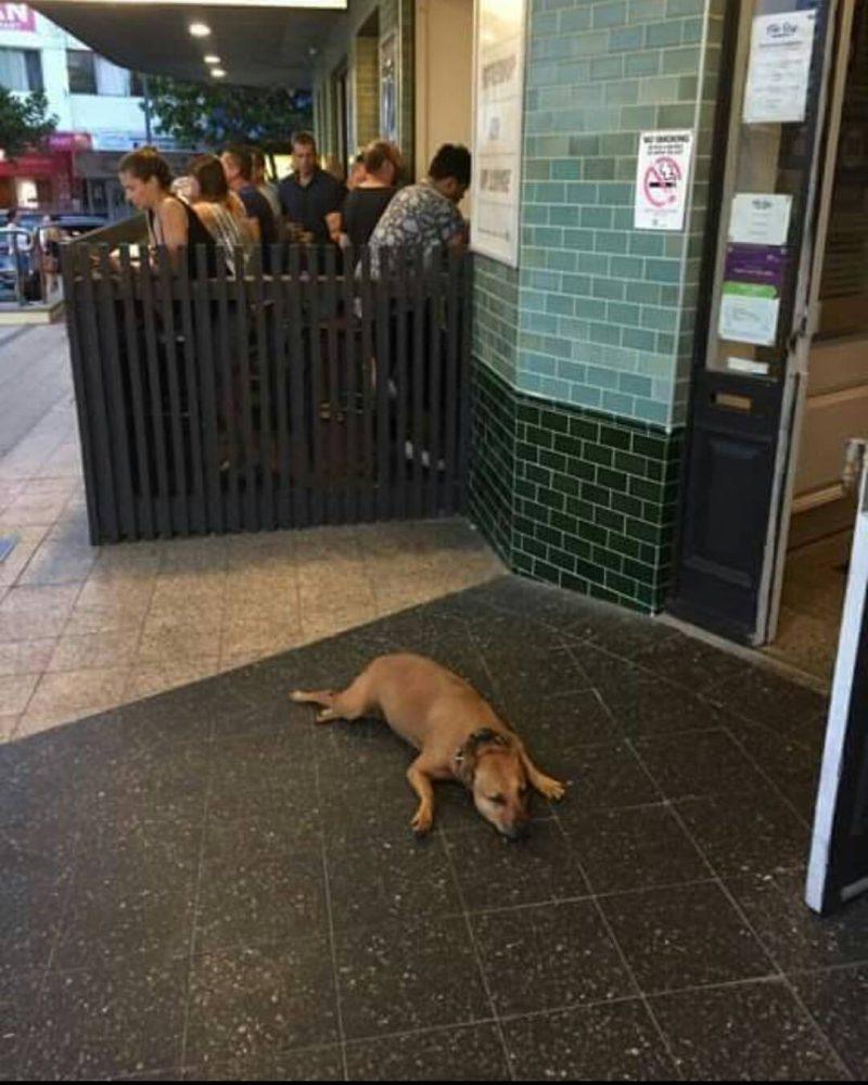 sad-dogs-3