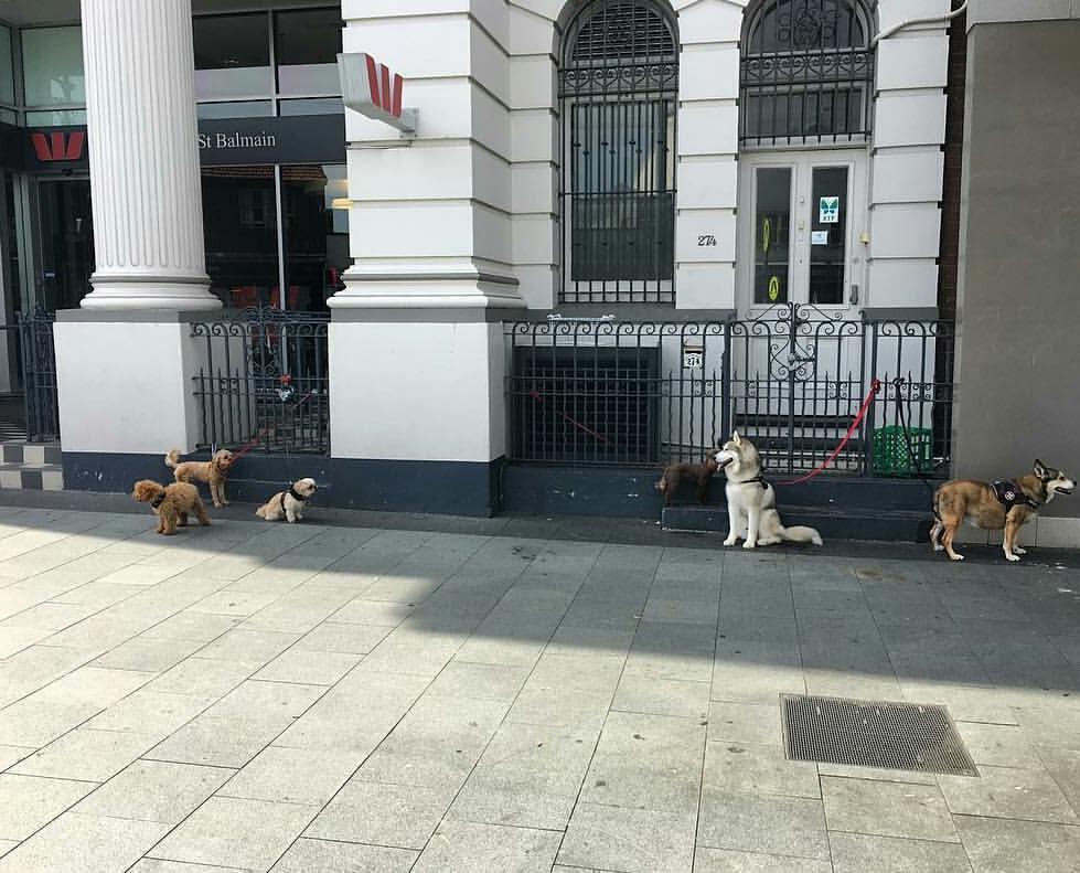 sad-dogs-8