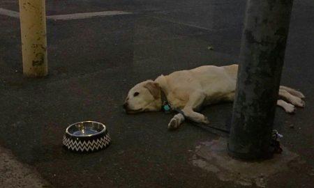 sad-dogs-featured