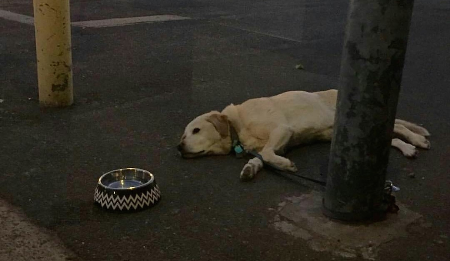 sad-dogs-featured