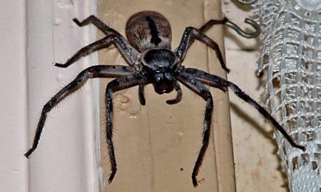 Spider w