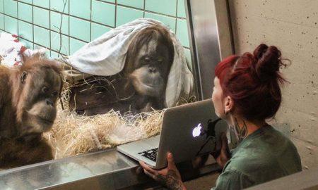 Tinder For Orangutans