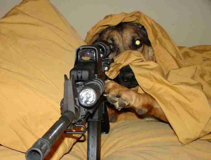 Dog GUn