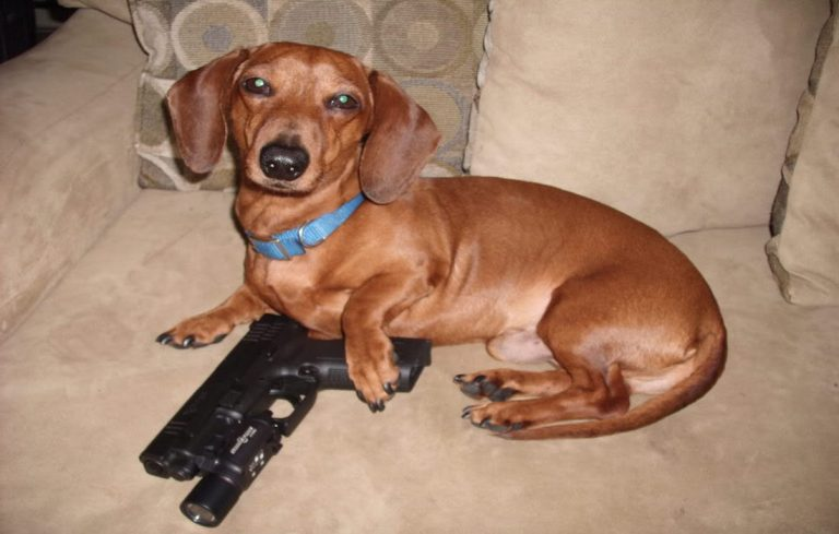 Dog with gun