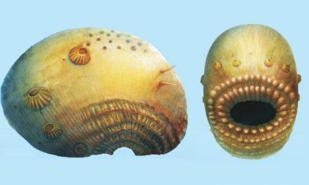 Saccorhytus-coronarious