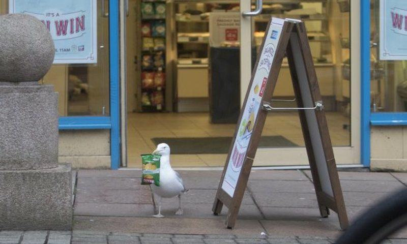 Seagull greggs