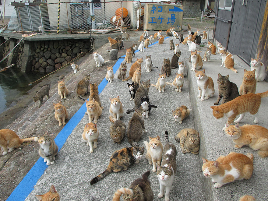 Cat Island 3