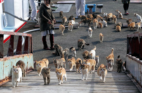 Photographer Captures The Army Of Felines On Japan S Cat