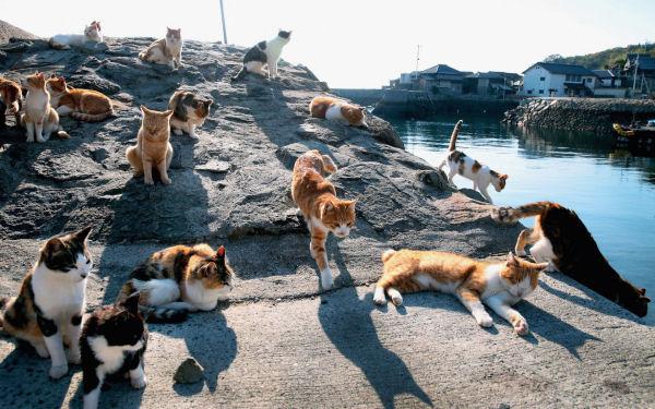 Cat Island 6