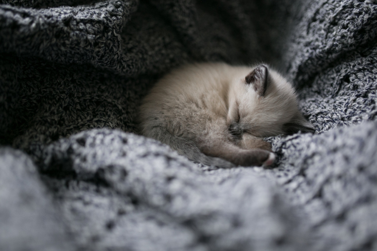 A tiny kitten nestled into a knitted blanket and sleeping