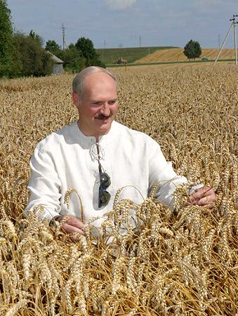 belarus wheat